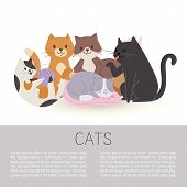 Cartoon Characters Cute Tabby Cats Vector Illustration Isolated On A Whitei With Space For Text. Dom poster