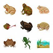 Vector Design Of Frog And Anuran Logo. Set Of Frog And Animal Vector Icon For Stock. poster