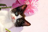 A Small Curious Kitten On A Sunny Pink Background. A Kitten On The Background Of Peonies In The Summ poster