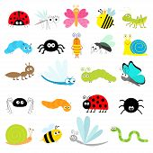 Insect Icon Set. Lady Bug Mosquito Butterfly Bee Grasshopper Beetle Caterpillar Spider Cockroach Fly poster