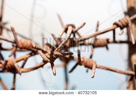 Crossed Barb Wire