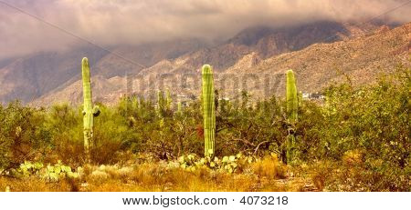 Sabino Canyon In Tucson Arizona