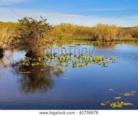 Paisaje de Everglades