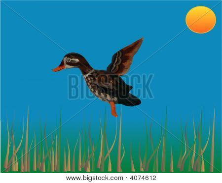 Duck Landing Illustration