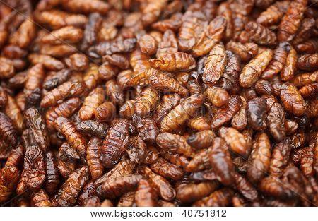 Frito en aceite las larvas de gusano de seda