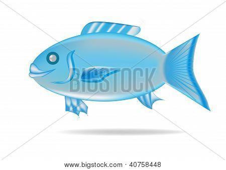 Painted sweetlip fish