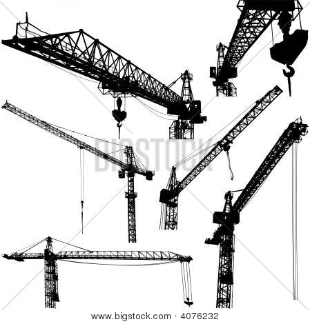 Cranes Vector Illustration