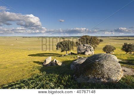 Alentejo Landscape