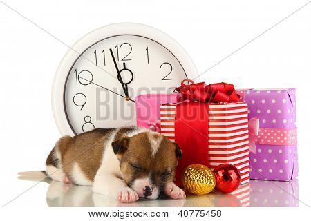 Beautiful little puppy surrounded by gift isolated on white