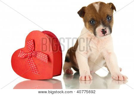 Beautiful little puppy with gift isolated on white