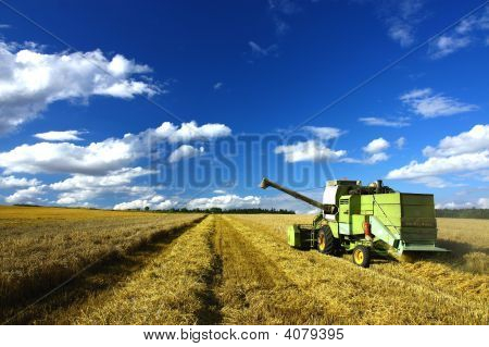 Harvest Machine On The Field