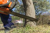foto of chainsaw  - Man with chainsaw cutting the tree under sunlight