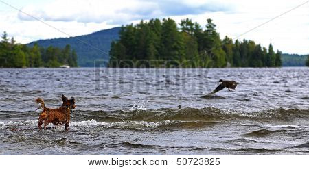 Schooling the local waterfowl