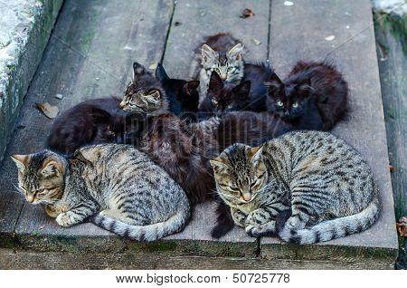 Stray Cats Family