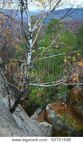 Birch On Lofty Stones In Forest