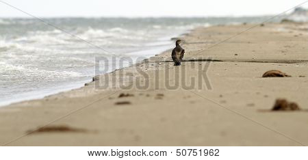 Abstract View Of A Cormoran On The Beach