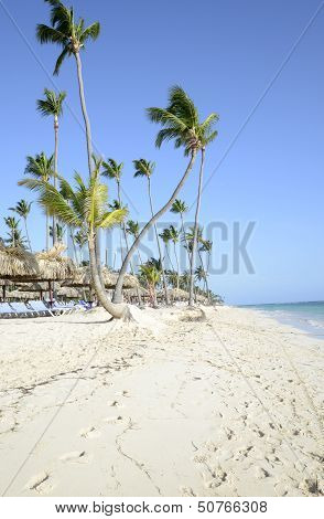 Bavaro Beach In Punta Cana In The Dominican Republic