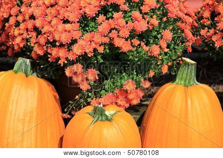 Trio of big colorful pumpkins