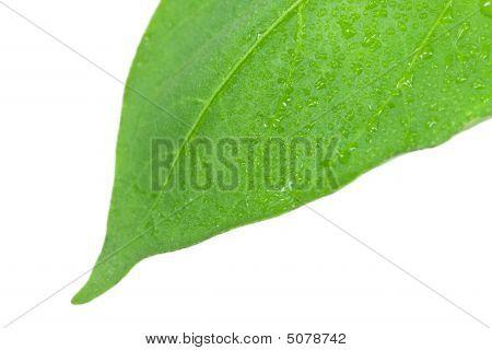 Seedlings Illustrating The Concept Of New Life-capsicum Annuum