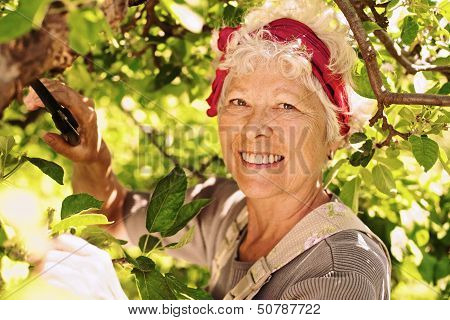 Elder Woman Working In Her Farm Smiling