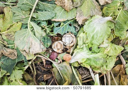 Eggshells on a Compost Heap