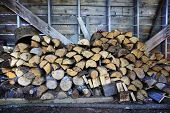 foto of moosehead  - Stacked dry firewood in shelter of rough hewed wood - JPG