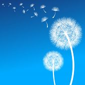 stock photo of integrity  - vector dandelion on a wind loses the integrity - JPG