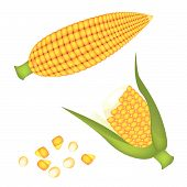 pic of corn-silk  - An Illustration of Fresh Ripe Sweet Corns with Grains of Corn Isolated on A White Background - JPG