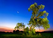 picture of nightfall  - Beautifully illuminated old ash tree at nightfall with deep blue sky and moon - JPG
