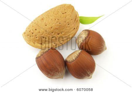 Hazelnuts And Almond