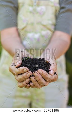 Old Woman With A Handful Of Compost
