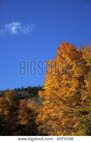 Autumn Leaves On Blue Sky
