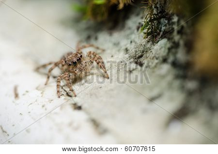 Spider In Wall Nature Background