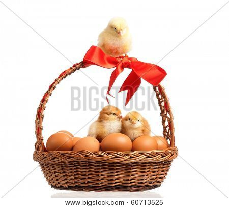 ��¡ute little chickens on eggs inside basket, isolated on white background