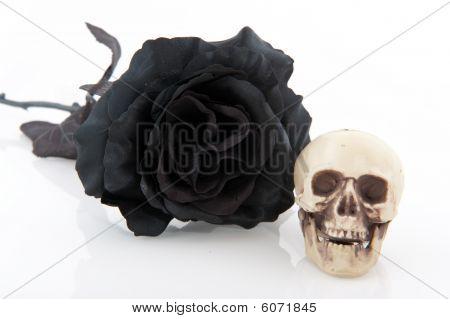 Halloween Black Rose