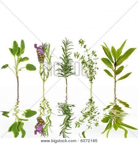 Herb Freshness