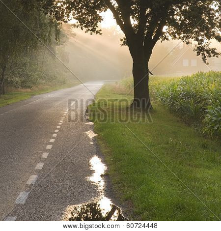 Dutch Country Road And Farm With Sunbeams
