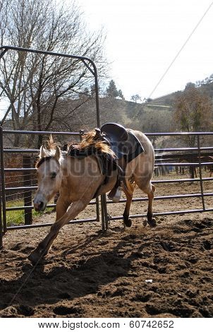 Horse Bucking in the Round Corral