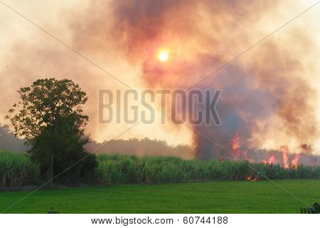 Fire and smoke in paddy