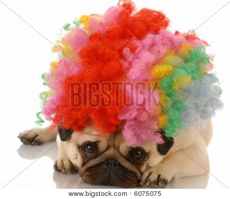 Pug Dressed As A Clown