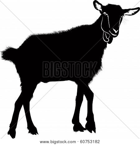 Goat kids animals isolated
