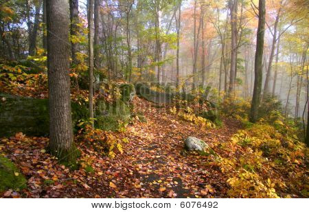 Fog in Allegheny mountains