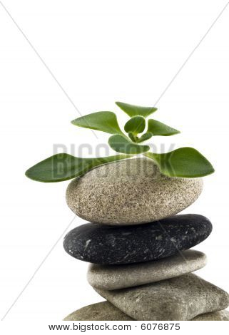 Green Life - Closeup Of Balanced Stone Tower With Plant