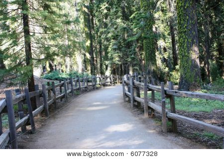walking path in forest