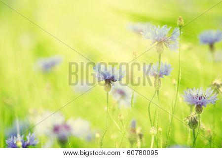 Wild Flowers In The Sunlight