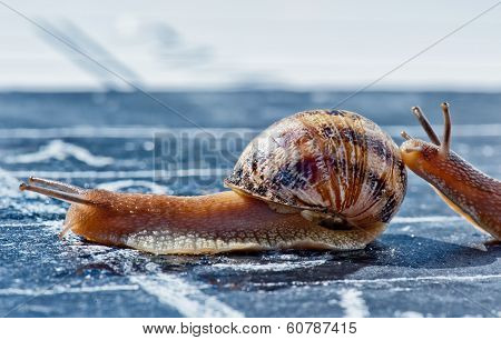 Snail Finish Encouraged By Its Congener