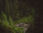 pic of creepy  - Creepy forest with spruces and mountain stream - JPG