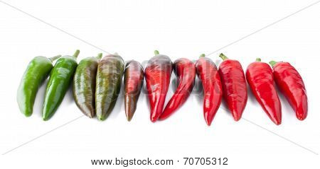 Different Stage Of Ripeness By Hot Peppers