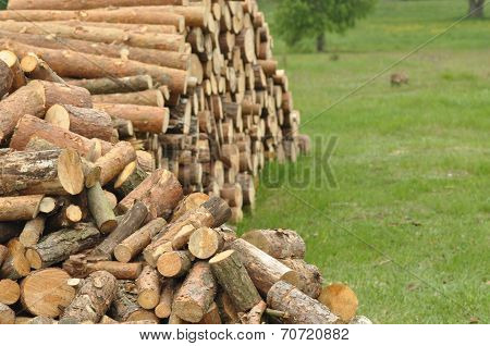 Firewood, Preparations For The Winter