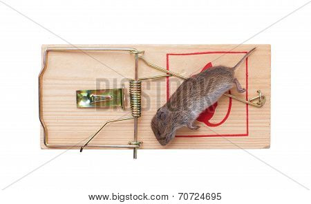 Mouse In A Mousetrap